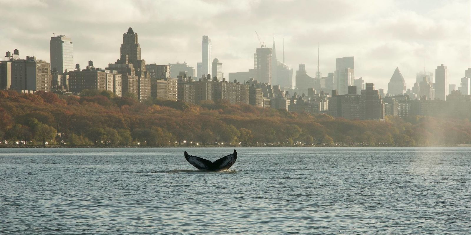 Hudson Whale